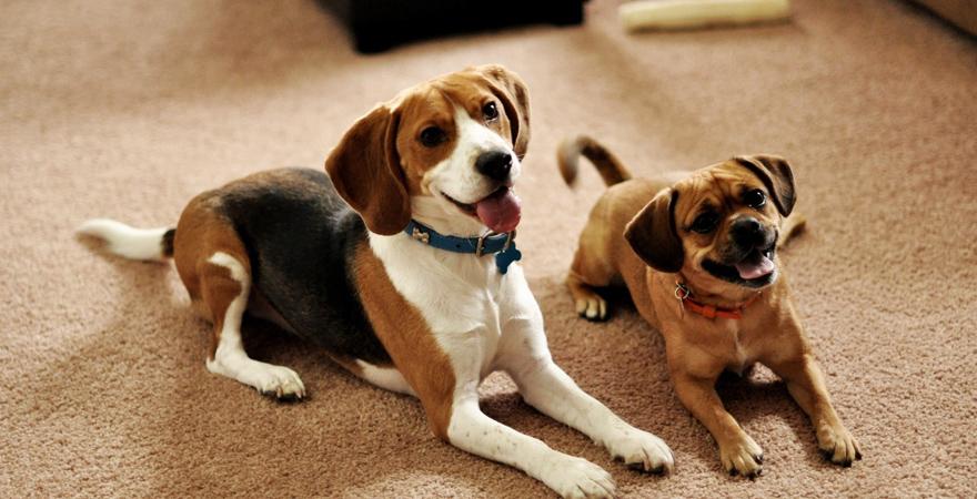 Отделка пола при ремонте квартиры с животными