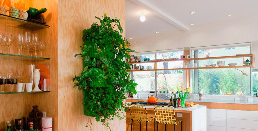 Живые растения на кухне в стиле эко