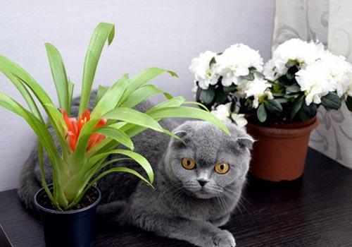 Как правильно разместить цветы в комнате?